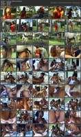 Mr. Horse - Dando pra Cavalo