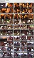 Mr. Horse - Puro Sangle